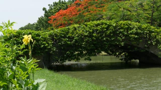 ruhiger teich im grünen park. grüne bäume wachsen an den ufern des ruhigen sees mit schlammigem wasser am sonnigen sommertag im park in asien - indochina stock-videos und b-roll-filmmaterial