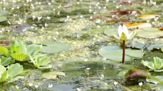 Calm Pond video