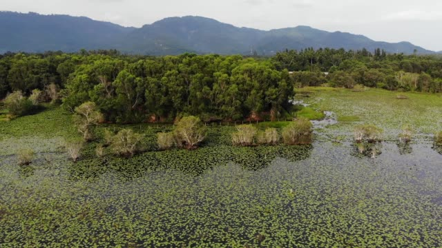 Calm pond with lotuses drone view. Lotus leaves floating on surface of tranquil lake in green countryside of Koh Samui paradise Island in Thailand. Mountains in the background. Nature conservation.