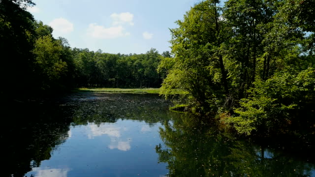 Calm River and Forest at summer day video