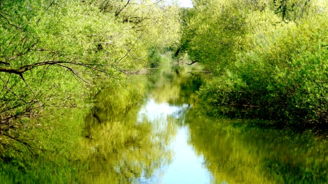 calm river in summer video