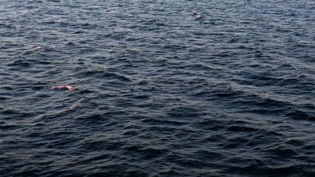 спокойное море - спокойная вода стоковые видео и кадры b-roll