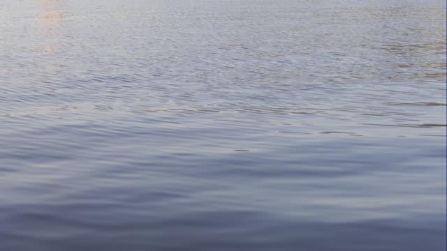 穏やかな海の波 - 水面点の映像素材/bロール