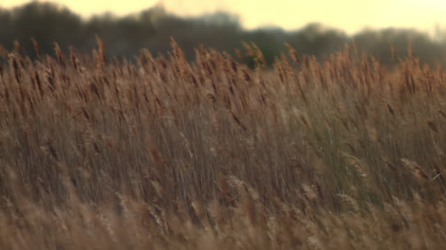 stockvideo's en b-roll-footage met kalme zonsondergang - grass