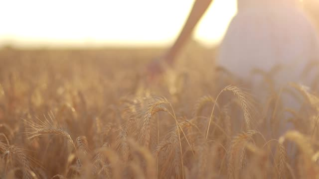 calm woman walking throung wheat field at sunset - battere le ali video stock e b–roll