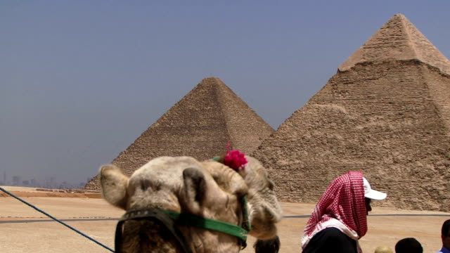 Camel in front of Pyramid video