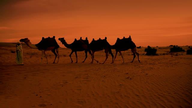 Camel train and herder in desert sunrise video