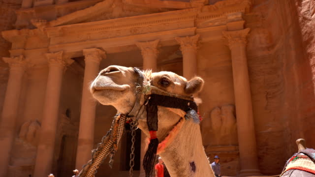 Camels in front of the Treasury at Petra the ancient City Al Khazneh in Jordan Camels in front of the Treasury at Petra the ancient City Al Khazneh in Jordan treasury stock videos & royalty-free footage