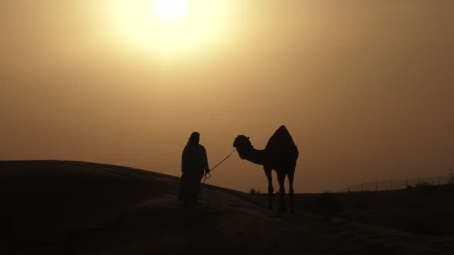Camels Camels. View of the silhouette of an Arab man and a camel standing on a sand dune in the desert at sunset. minority groups stock videos & royalty-free footage