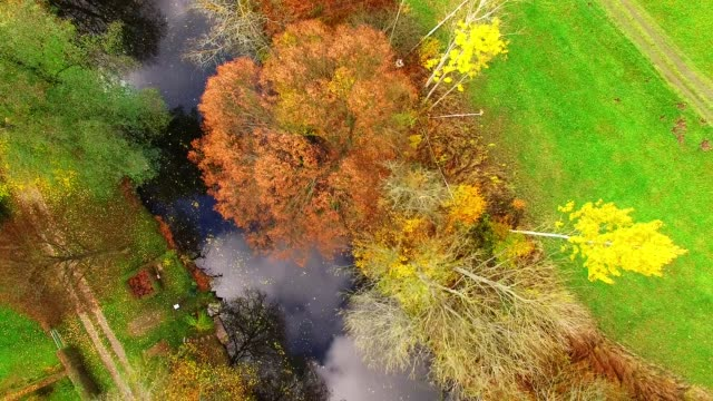 camera flight over radbuza river. colorful autumn on czech countryside. european nature from above. - trout video stock e b–roll