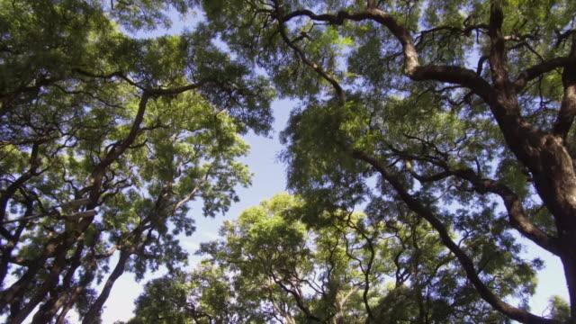 kamera pov flygande drönare kör låg vinkel över gatuträd och byggnader. sol reflektioner – flare. - realtid bildbanksvideor och videomaterial från bakom kulisserna