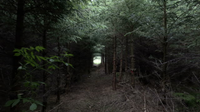 camera move through dark forest - mistero video stock e b–roll
