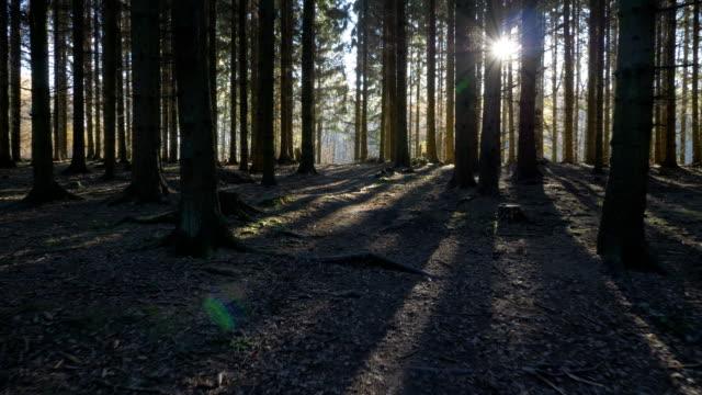 kameran rörelse alonga en väg genom i en granskog - pine forest sweden bildbanksvideor och videomaterial från bakom kulisserna