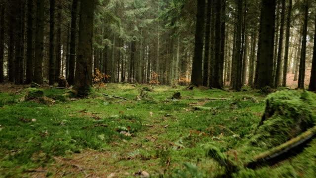 kameran rörelse alonga moss i en granskog - pine forest sweden bildbanksvideor och videomaterial från bakom kulisserna