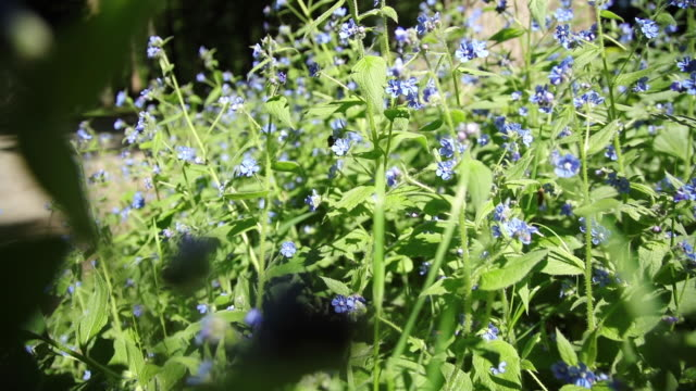 camera movement through the blue flowers