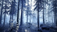 istock Camera movement through the snowy winter forest 1226069516
