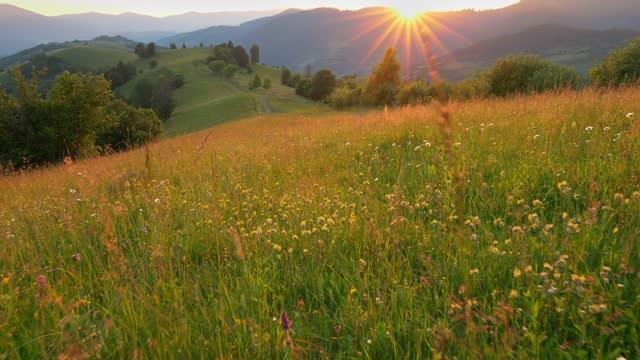 la fotocamera si muove attraverso un prato verde estivo in montagna con molti fiori colorati. il sole tramonta dietro la montagna, formando bellissimi raggi e illuminando il paesaggio. ottimo posto per rilassarsi dalla vivace città, escursioni e passeggia - transcarpazia video stock e b–roll