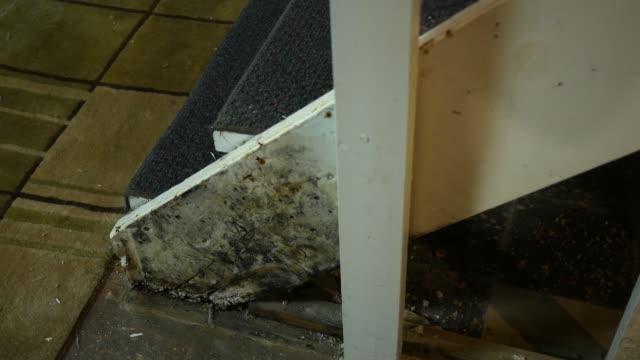 vídeos y material grabado en eventos de stock de cacerolas de la cámara hasta el fondo inseguro mohoso de una escalera - imperfección