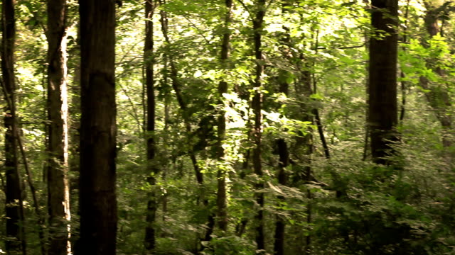 camera pans over cinematic woodland slope of a hillslide near dusk - joseph kelly stock videos and b-roll footage