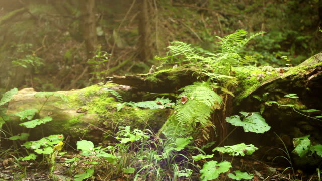 Camera slide near old Tree Stump with Fern leaves video