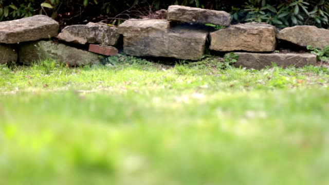 Camera slides by rock border wall in grassy yard during daytime
