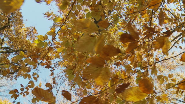 HD Camera Stabilization Shot: Autumn Trees