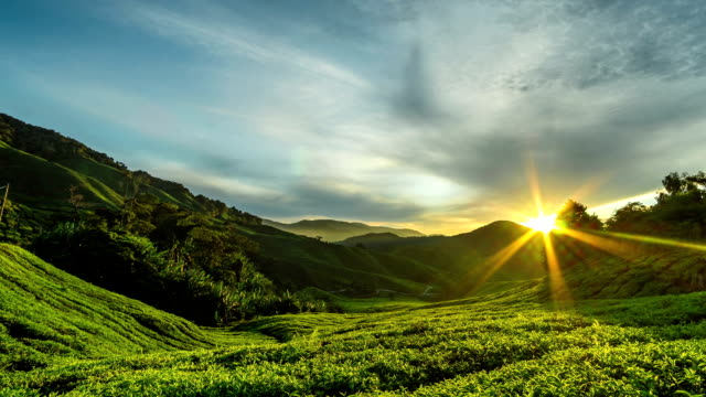 Cameron Highlands Sunrise time lapse at green tea farm mountain video