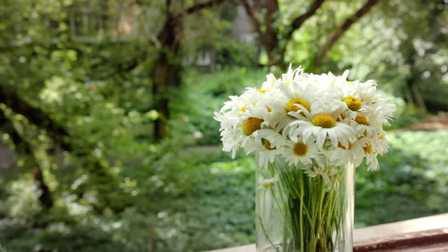 Camomile animation in the cinemagraph technics. White flowers in glass vase in a summer day on the background of the old Park. Cinema graph HD footage, close-up video