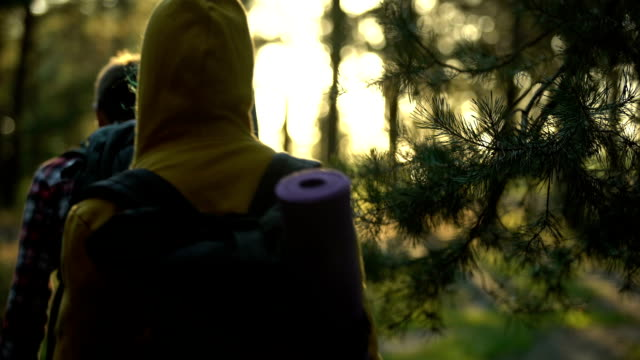 vídeos de stock e filmes b-roll de campers walking in forest during sunset, female looking around, admiring view - man admires forest
