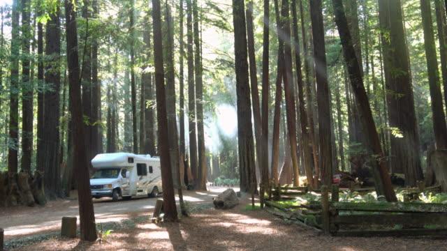 在加利福尼亞紅杉林露營 - 州立公園 個影片檔及 b 捲影像