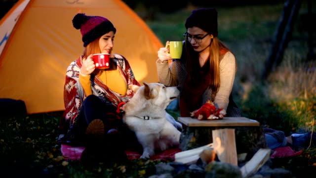 camping på kall wheater - hund skog bildbanksvideor och videomaterial från bakom kulisserna