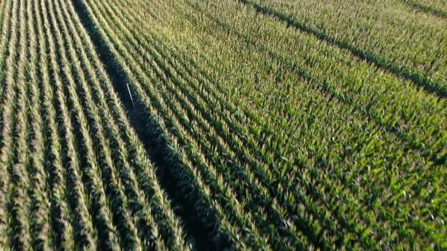 campo de maíz del del aire - agricultural machinery stock videos & royalty-free footage