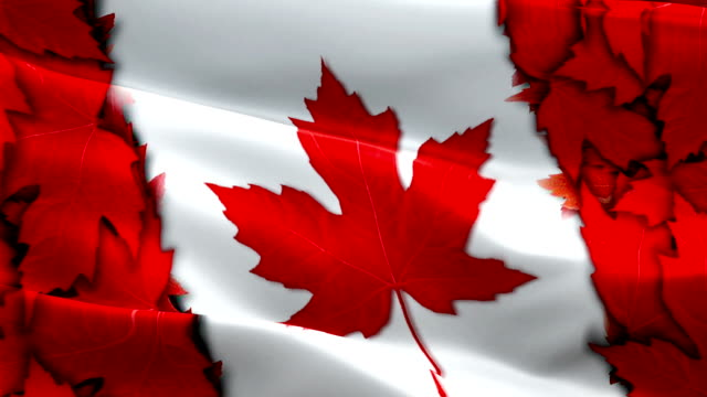 canada flag video waving in wind. realistic canadian flag background. canada flag looping closeup 1080p full hd 1920x1080 footage. canada north american country flags footage video for film,news - kiss filmów i materiałów b-roll