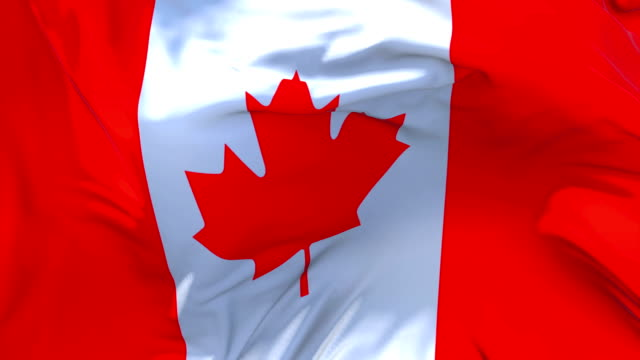 canada flag waving in wind slow motion animation . 4k realistic fabric texture flag smooth blowing on a windy day continuous seamless loop background. - machać filmów i materiałów b-roll