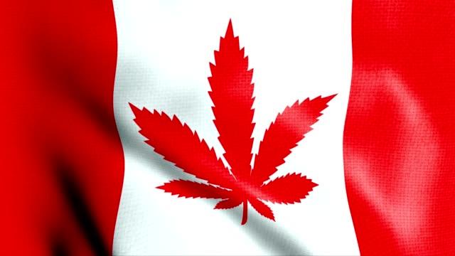 canada flag with cannabis leaf legalization - canada flag stock videos & royalty-free footage