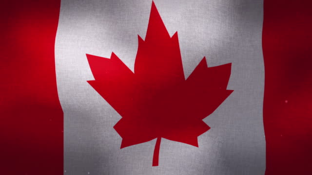 canada national flag - waving - canada day stock videos & royalty-free footage