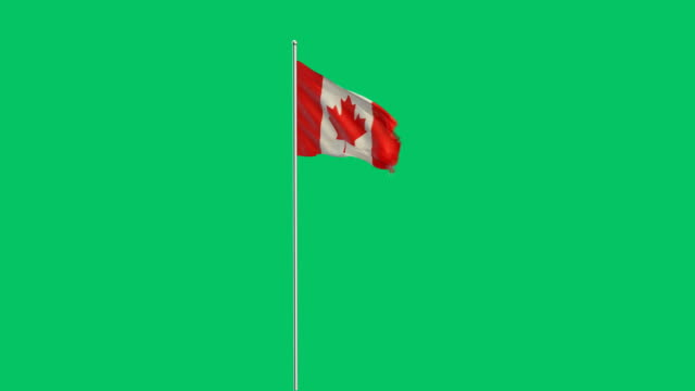 canadian flag rising - canada flag stock videos & royalty-free footage