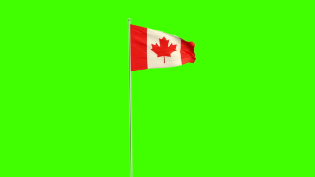 canadian  flag - canada flag stock videos & royalty-free footage