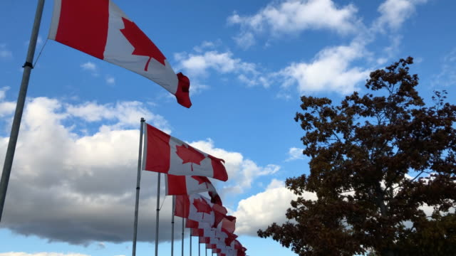 canadian flags - canada day stock videos & royalty-free footage