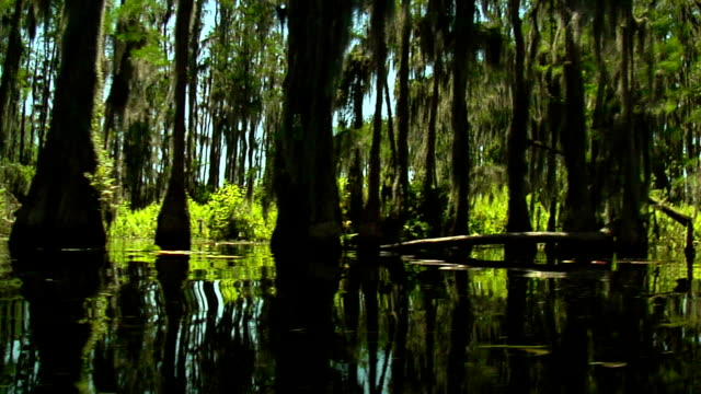 Canal Trees Pass By 2 video