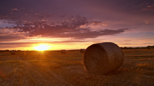 DS Candid field of bales at sunset video