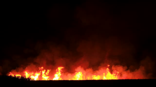 Cane Fields Burning Before Harvest, NSW Cane Fields Burning Before Harvest in Tweed Valley Australia australia stock videos & royalty-free footage