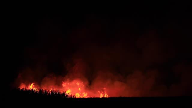 stockvideo's en b-roll-footage met cane velden branden voor de oogst, nsw - bosbrand