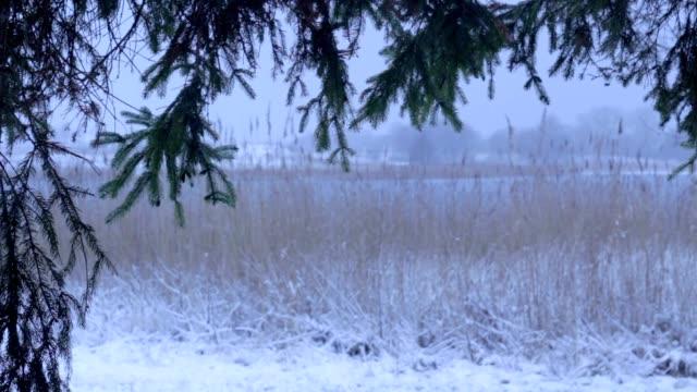 杖、葦と冬の木 - 湿地草点の映像素材/bロール