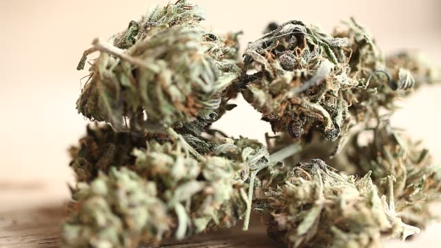 cannabis business concept. Medical Marijuana video cannabis business concept. Medical Marijuana hashish stock videos & royalty-free footage