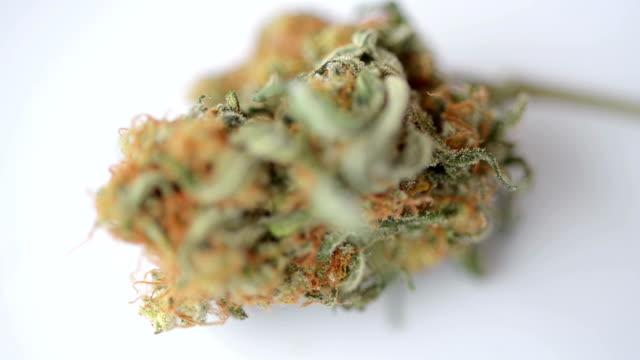 cannabis blomma isolerad på vit bakgrund - hasch bildbanksvideor och videomaterial från bakom kulisserna