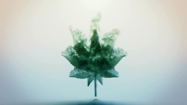 cannabis leaf tecken. - hasch bildbanksvideor och videomaterial från bakom kulisserna