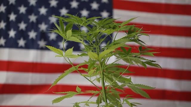 cannabis marijuana  American flag video
