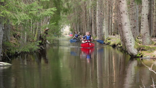 Canoe / Kayaking river trip through trees video