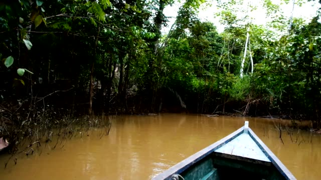 canoe ride across the flooded jungle on the way to remote native communities canoe ride across the flooded jungle on the way to remote native communities wetland stock videos & royalty-free footage
